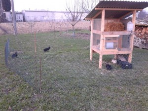 Conigli nel recinto con riparo sopraelevato